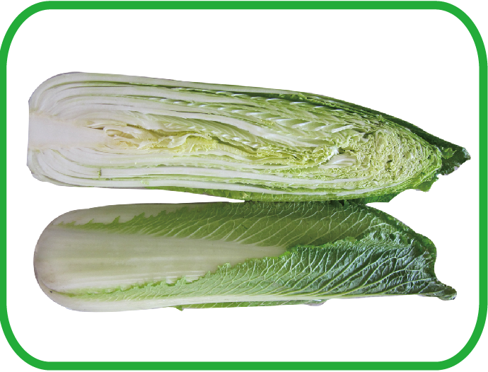 长白菜 Long Cabbage
